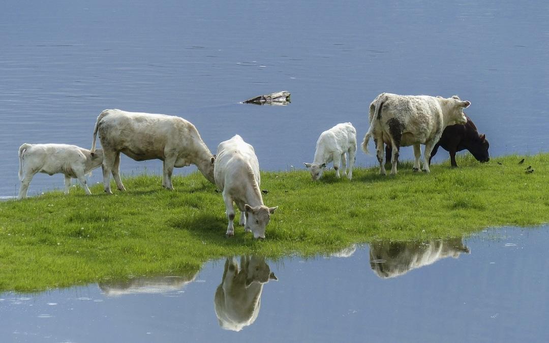 Trekkers, koeien, piemels en andere levensvragen